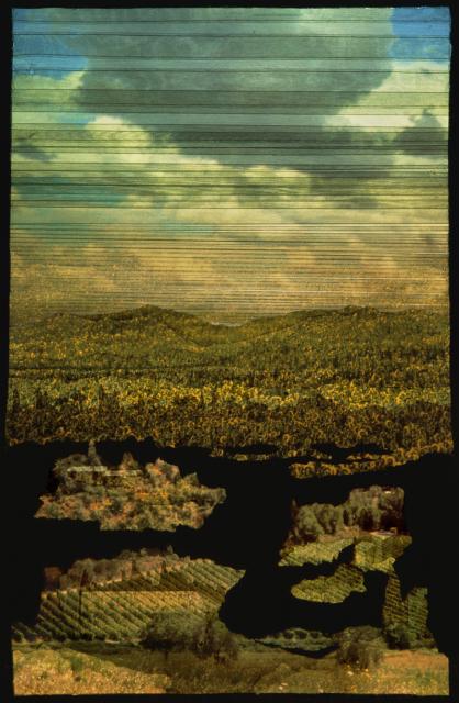 2016 Broken Landscape_Paesaggio Spezzato_Sunflowers '16